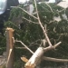 Brooklyn Tree